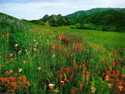 Красивые фото Цветы на лугу, скачать ...: znak.at.ua/photo/oboi/priroda/cvety_na_lugu/12-0-2658