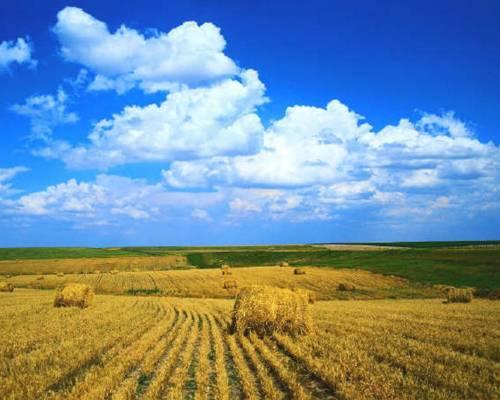 Красивое фото поля пшеницы