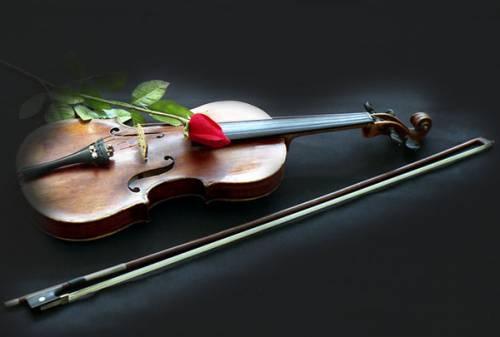 Скрипка и красная роза красивая картинка