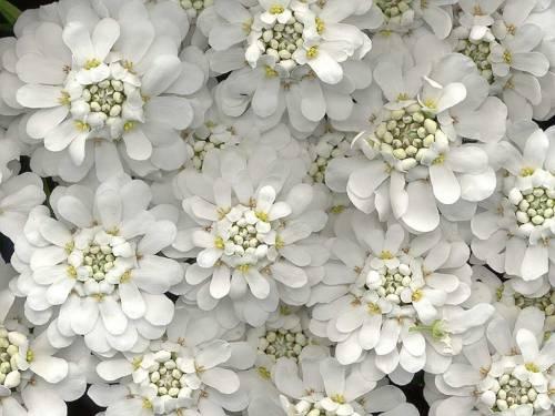 Красивое фото необыкновенные цветы
