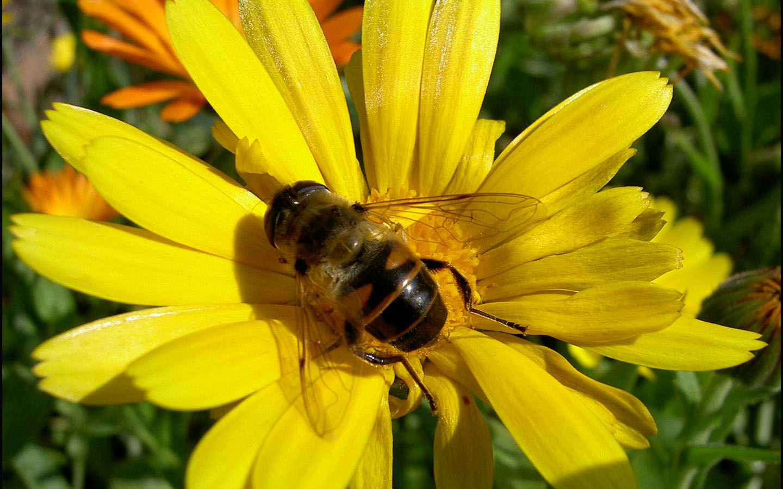Фото цветка с пчелками